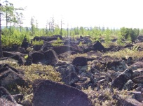. Курумное поле Фото Андрея Чжана