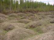 Thermokarst in Yakutia 8