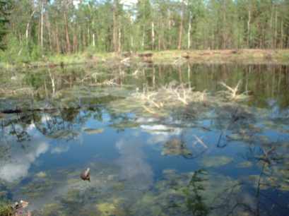 Thermokarst Lake 1